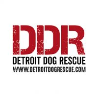 Detroit Dog Rescue_Logo.jpg